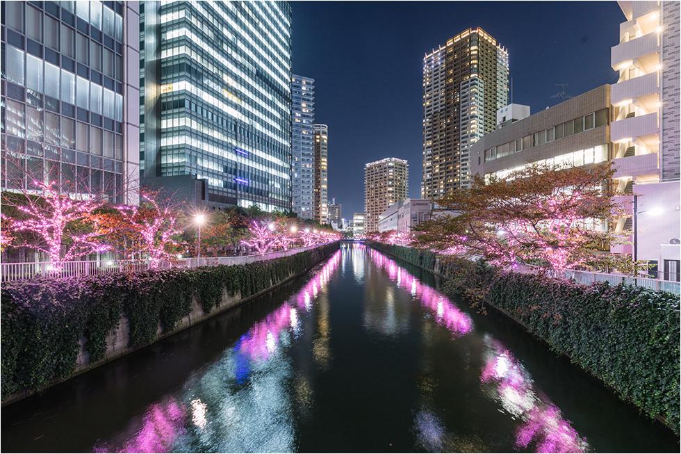 2021東京夜櫻綻開!目黑川冬季聖誕燈飾:2.2公里絕美粉紅「冬之櫻」 - threeonelee.com