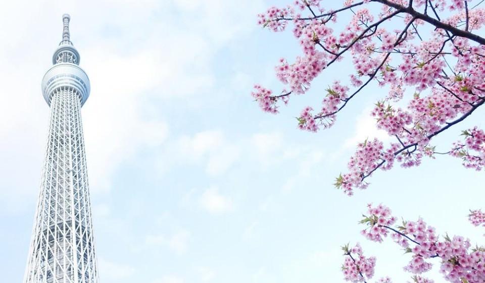 2021日本櫻花最前線!日本各地開花、滿開時間預測! - threeonelee.com