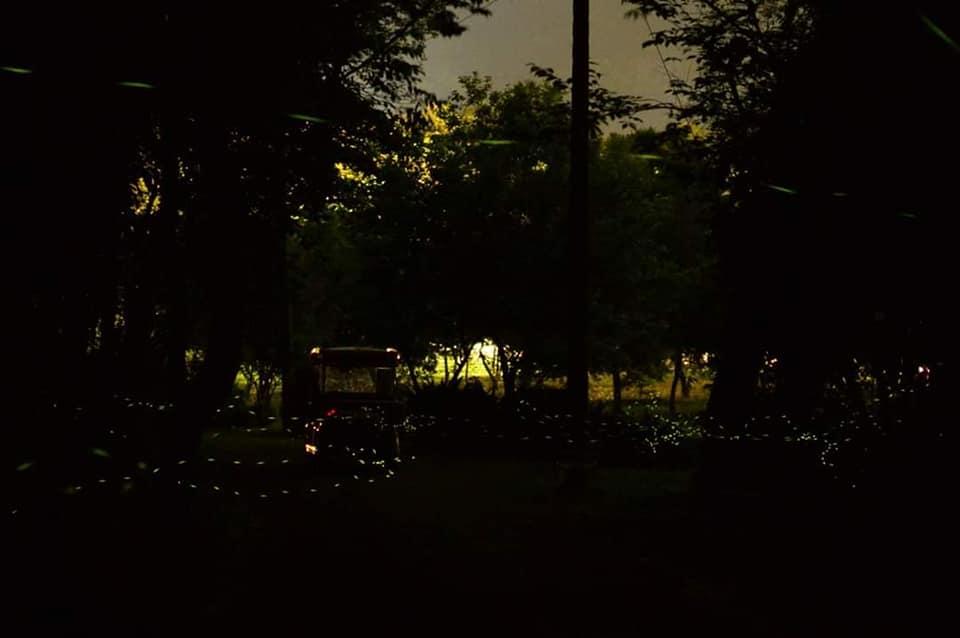 富源國家森林遊樂區 蝴蝶谷溫泉度假村 螢火蟲