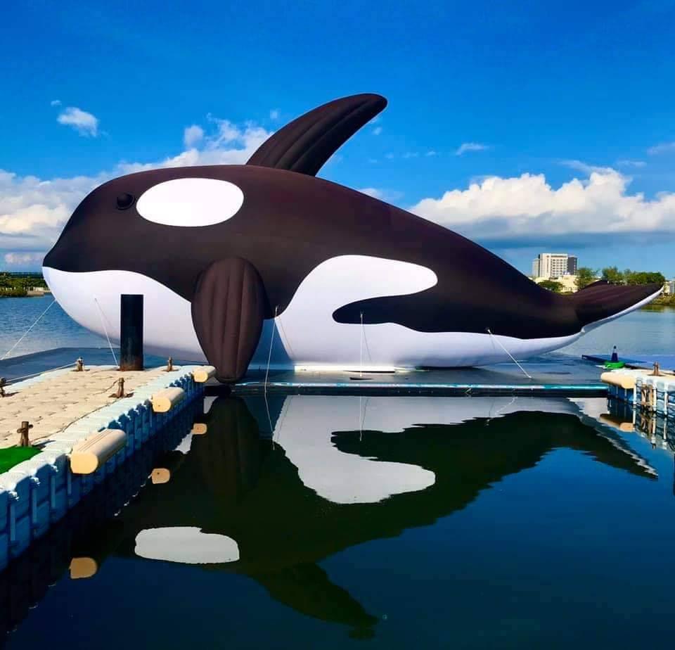 【台南景點】全球最大虎鯨裝置藝術:安平虎鯨亮晶鯨ORCA GO!嘉年華 - threeonelee.com