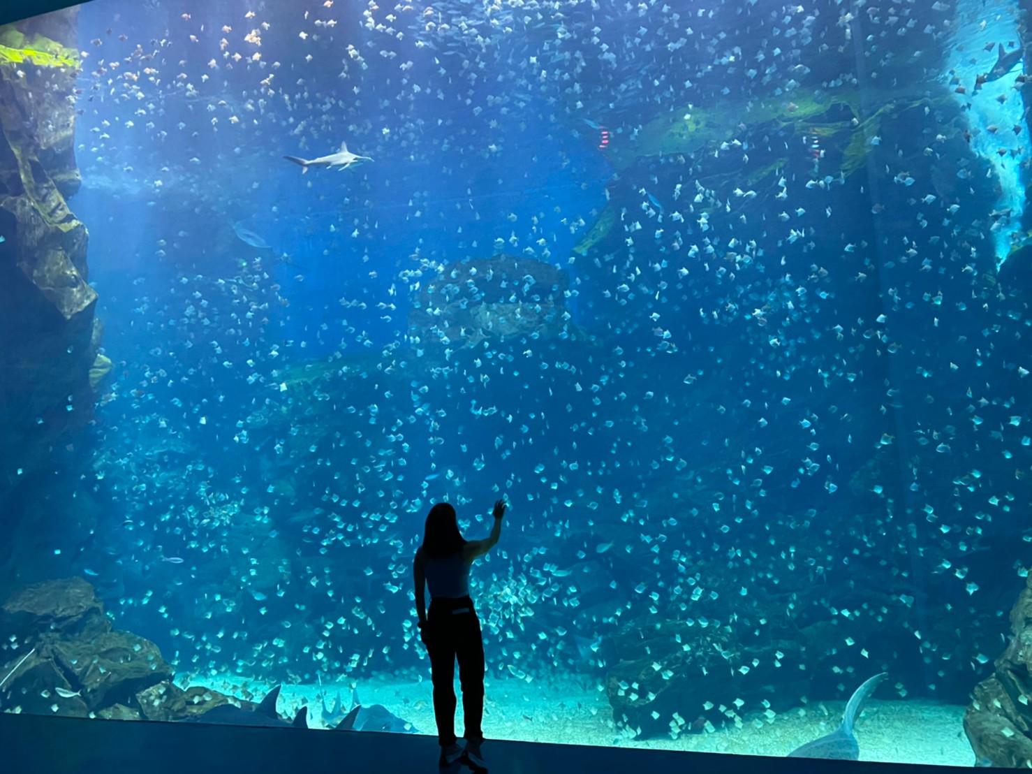 桃園水族館Xpark 和逸飯店桃園館 桃園青埔 Xpark 都會型水生公園門票