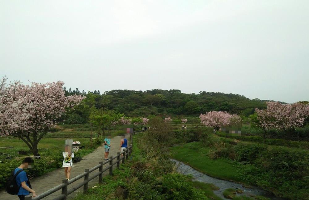 三芝三生賞櫻步道