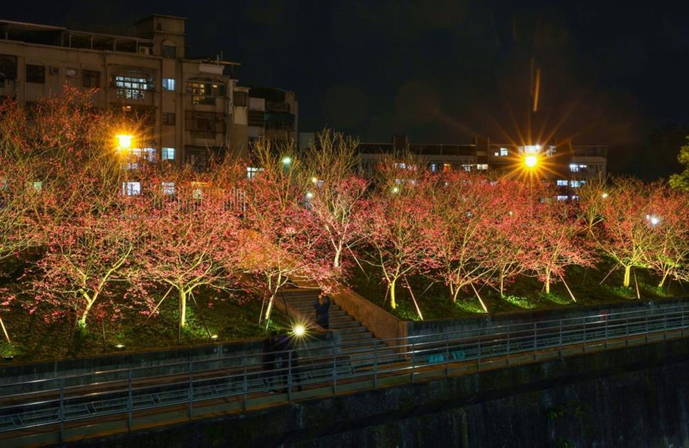 內湖樂活夜櫻季