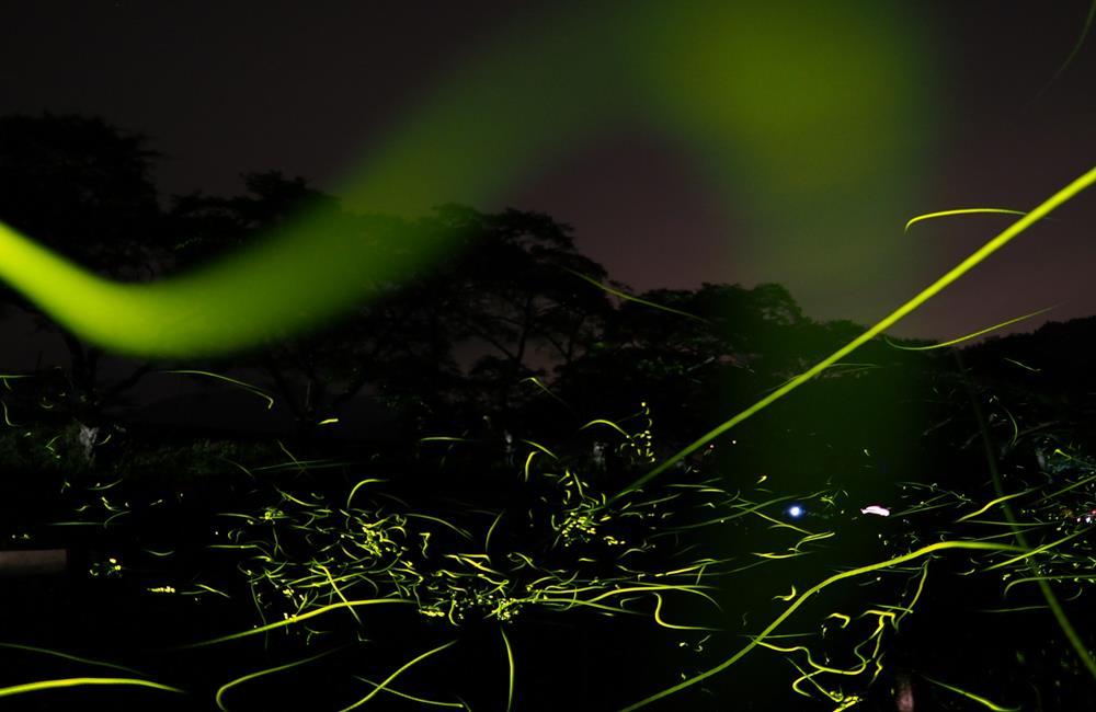 賞螢火蟲 螢火蟲季 賞螢 賞螢景點 螢火蟲景點