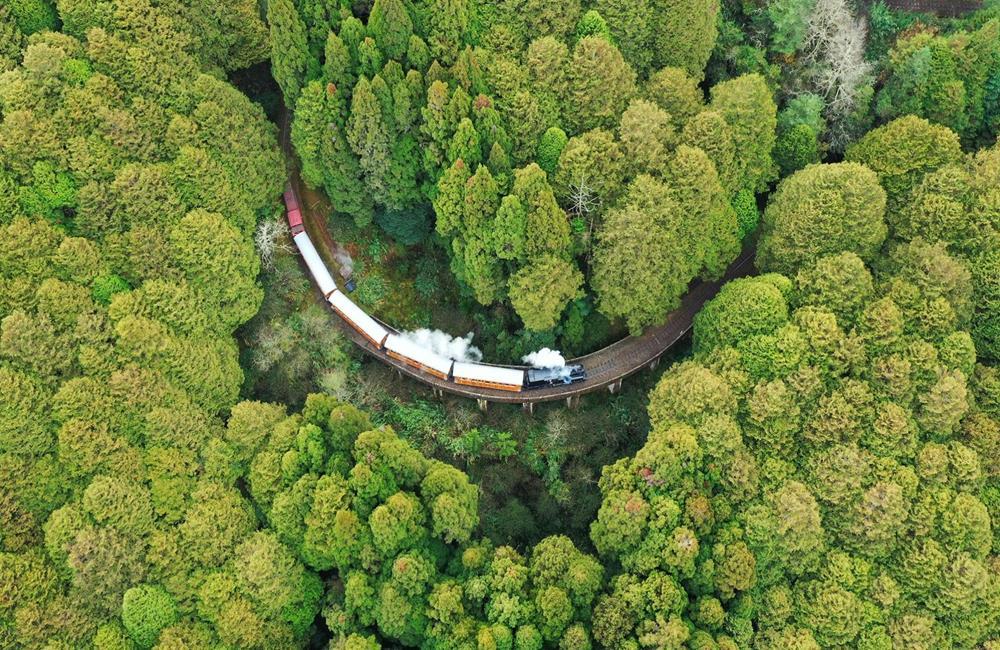 阿里山櫻花季 高山鐵道之旅 SL-31蒸汽火車主題列車