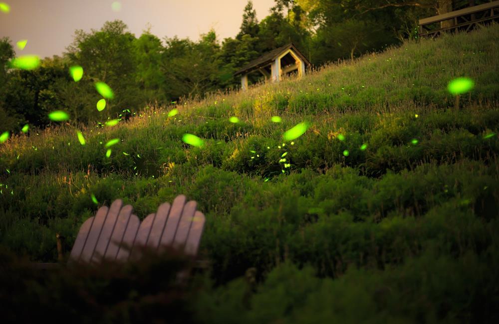 薰衣草森林,螢火蟲節,螢河旅行,薰衣草森季,薰衣草節