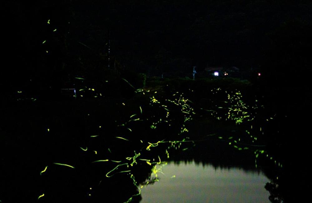 螢火蟲,螢火蟲景點,螢火蟲季,賞螢火蟲,螢火蟲住宿