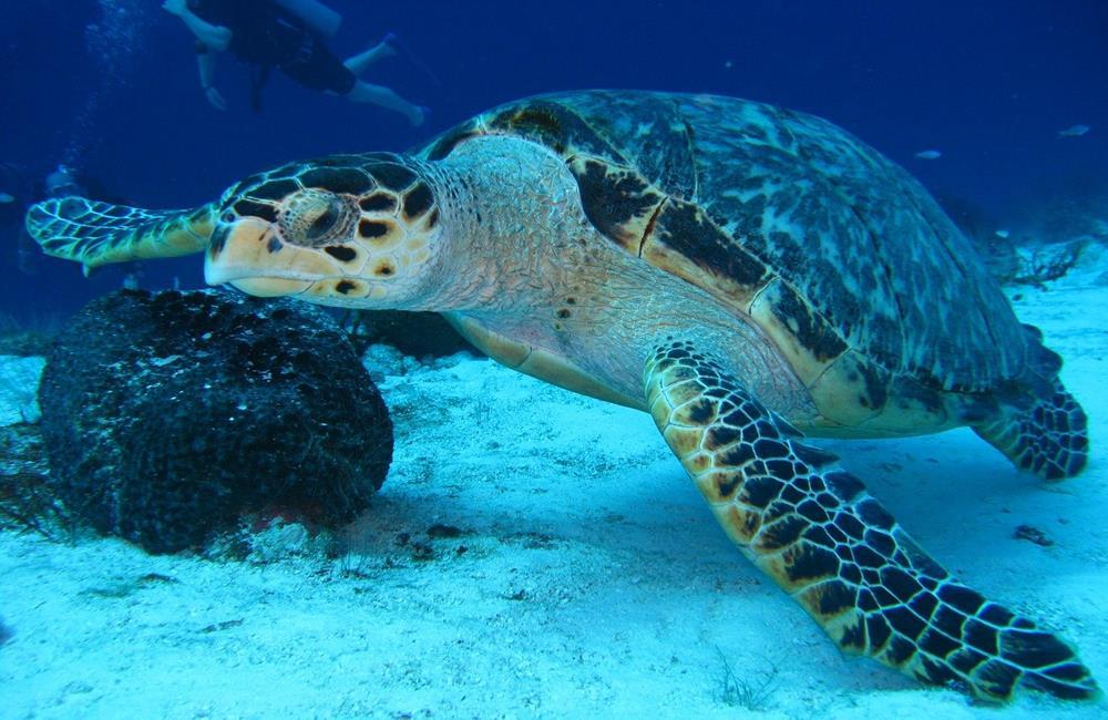 小琉球,海龜,綠蠵龜,小琉球潛水,小琉球浮潛,小琉球行程,小琉球海龜,小琉球 綠蠵龜,小琉球與海龜同游